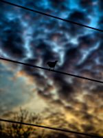 Like A Bird On A Wire by B5160-R