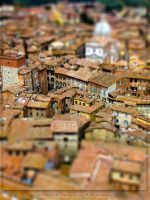 Tiny roofs of Siena by crh