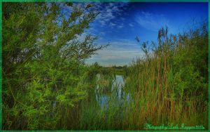 Hungarian landscapes.HDR-picture(photo series)19. by magyarilaszlo
