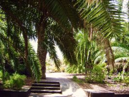 under the palm trees by Paul774