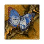 AB14  Life is like a Butterfly-1A by Xantipa2