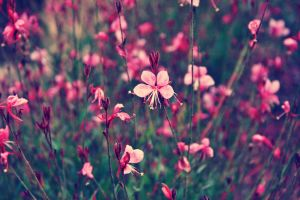Pink Flowers II by sacadura