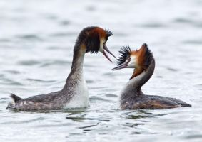 I wish you had lips by Jamie-MacArthur