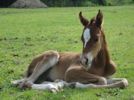Freddie 1 by Horselover60-Stock