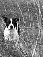 Lost Dog Black And White by just-started-bloomin