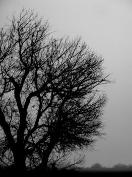 Ghost Tree by deathbyraven