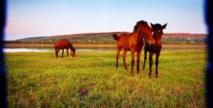 Horses at the river 2 by Viand