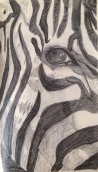 Zebra eye close up by evildollie