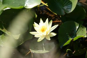 view to waterlily 7 by ingeline-art