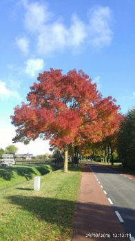 Red autumn tree by Revolutionist1