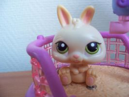 My littlest pet shop by Acid-Fiend