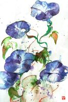 Watercolor: Morning-glory by muttiy