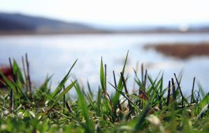 green grass home by iacobvasile