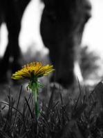 Horse and flower by klau14