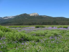Elk Meadows 1 - 2008 by pricecw-stock