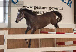 Freejumping Geyer 2014_13 by CalyHoney