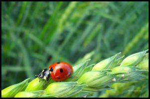 ladybug 4 by all17