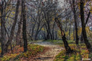 Path in The Woods by t-maker