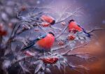 Bullfinches by Poglazovs