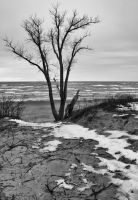 Lonely tree By Lake Michigan by starfire777