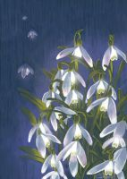 Snowdrops by Finnguala