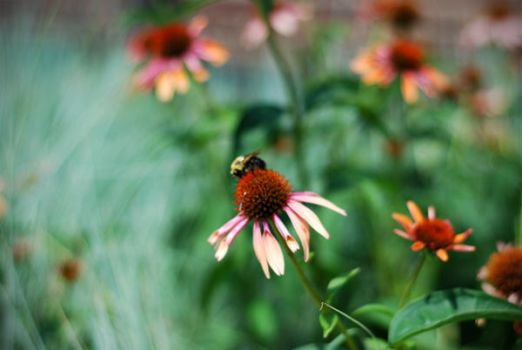 Out of Focus Bee by enchanteddroppings
