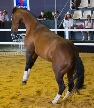 STOCK - 2014 Total Equine Expo-116 by fillyrox