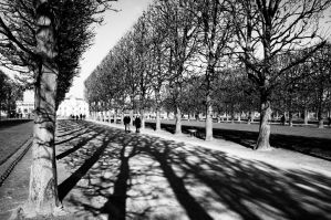 Avenue of Trees by Engazung
