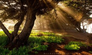 Enchanted Forest by michael-dalberti