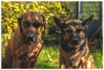 blues dogs by corniger-aries
