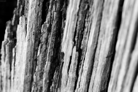 Perished Wood by Dead-Death