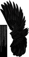Dual Upright Wing - Black by Thy-Darkest-Hour