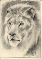 LION by indio1234