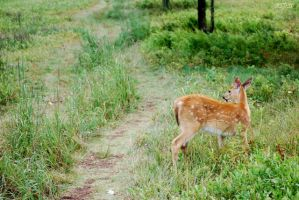 deer in the road by xspes