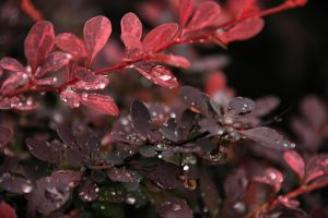 Wet Leaves by digitalpix4all