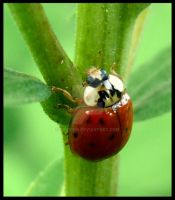 Lady Bug by javv556