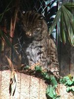 Fishing Cat 3 by dtf-stock