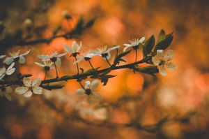Autumn in spring by dn1w3r