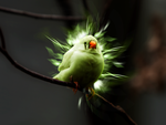 .fluobird by zse04