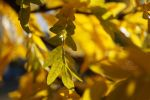 Autumn leaves I by Lykorias