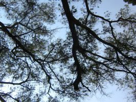 tree branches by CotyStock