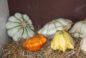 awesome pumpkins 4 by ingeline-art