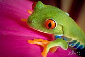 Prince of Frogs by Ckhamak