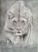 Lioness by DarkSpawn81