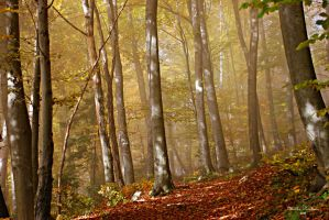 Fog in forest by markopu9