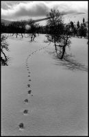 Marks on the snow by MrKainulainen
