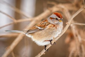 .:Little Sparrow:. by RHCheng