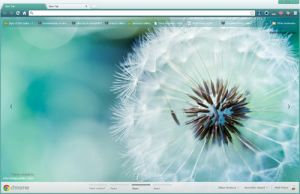 Macro Dandelion Google Chrome Theme by vrkm2003