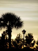 Palmetto by AmorVitae