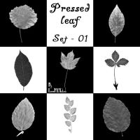 Pressed leaf - set 01 by LunaNYXstock